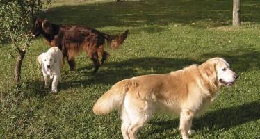 L'Ajuntament prohibirà que els gossos vagin sense lligar